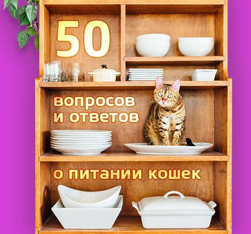 50 вопросов и ответов о питании кошек