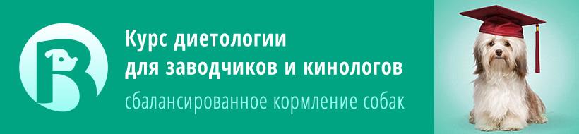 Курс диетологии для заводчиков и кинологов