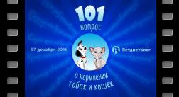 Вебинар 101 вопрос о кормлении собак и кошек