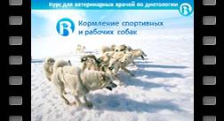 10. Кормление спортивных и рабочих собак при разном уровне нагрузок