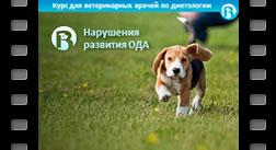 17. Нарушения развития ОДА у собак