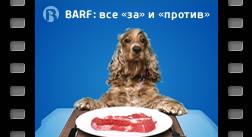 BARF — все «за» и «против»