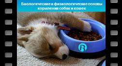 1. Биологические и физиологические основы кормления плотоядных животных
