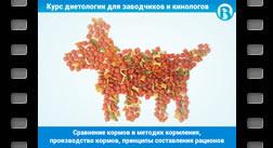 Сравнение кормов и методик кормления, производство кормов, принципы составления рационов