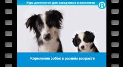 Кормление собак в разном возрасте