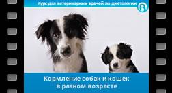 9. Кормление в разном возрасте – щенок, взрослая собака, сеньор / котенок, взрослая кошка, сеньор.